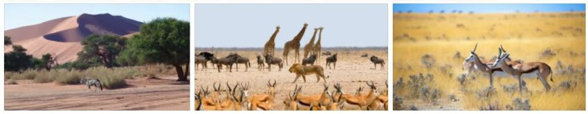 Flora and fauna in Namibia